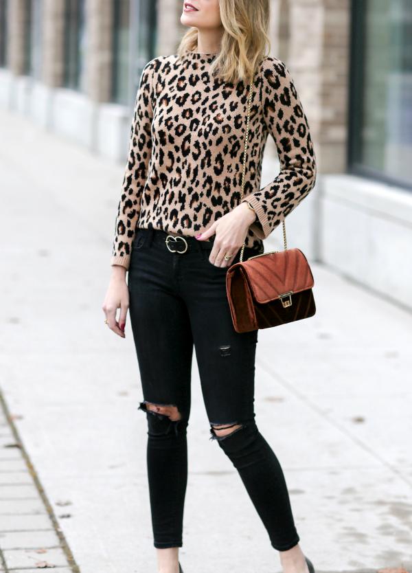 A Little Leopard